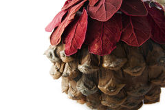 Christmas pine cone Stock Photos