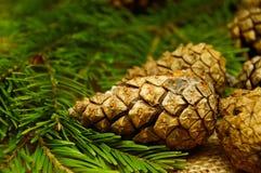 Christmas pine cone macro Stock Photos