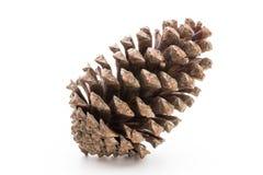Free Christmas Pine Cone On White Background. Royalty Free Stock Photo - 130307655