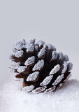 Christmas pine cone in  snow Royalty Free Stock Photos
