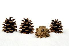Christmas pine cone on snow stands out of crowd in line Stock Images
