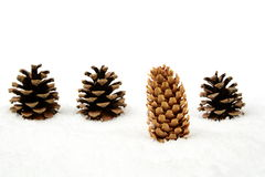 Christmas pine cone on snow stands out of crowd in line Stock Photography