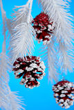 Christmas Pine Cones Royalty Free Stock Photography