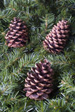 Christmas Pine Cones 2 Stock Image