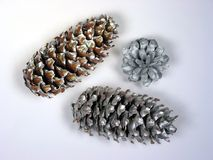 Christmas pine cones Stock Photos