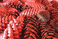 Christmas pine cones big red Stock Image
