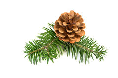Christmas pine cones Stock Images