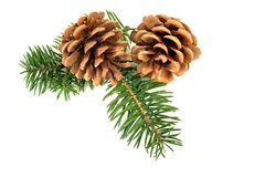 Christmas pine cones Royalty Free Stock Photo