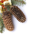 Christmas Pine cones Stock Photo