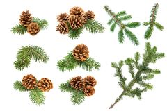 Christmas pine cones and branches stock image