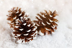 Christmas pine cones decoration on snow Royalty Free Stock Photography