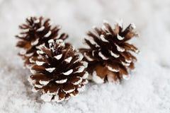 Christmas pine cones decoration on snow Stock Photos