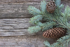 Christmas pine cones and needles Stock Images
