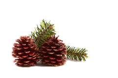 Christmas pine cones, pine leaves. Isolated on white background. Horizontal, landscape orientation Royalty Free Stock Photo