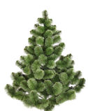 Christmas pine without decoration. Green christmas pine without decoration. Isolated Royalty Free Stock Images