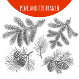 Christmas pine, fir tree branches and cones vector sketch Stock Images