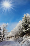 Christmas in pine forest Stock Photography