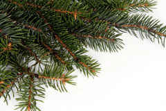 Christmas pine frame Stock Images