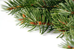 Christmas pine frame. Christmas green pine branches frame on a light backgrouns Royalty Free Stock Photos