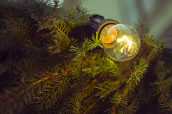 Christmas Pine Light Bulb Stock Images