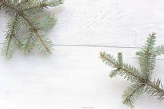 Christmas  pine  needles Royalty Free Stock Photo