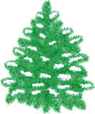 Christmas pine with snow Royalty Free Stock Photos