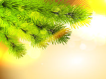 Christmas pine tree. With space for your text Stock Photography