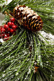 Christmas pine tree Royalty Free Stock Photo