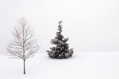 Christmas Pine tree Royalty Free Stock Image