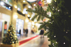 Christmas pine-tree on blurred background Stock Photography