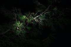Christmas Pine Tree Branch Stock Photos