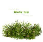 Christmas pine tree branch isolated Royalty Free Stock Image