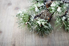 Christmas pine tree branch Stock Photos