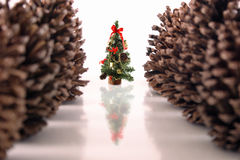 Christmas pine tree and cones Stock Photos