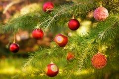 Christmas pine tree Royalty Free Stock Photography