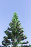 Christmas pine tree Stock Photos