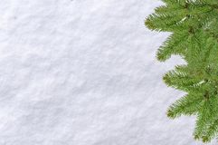 Christmas pine tree and snow surface white background. On a bright cold morning day Stock Photography