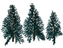 Christmas pine trees royalty free illustration
