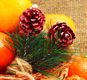 Christmas pine twigs with pine cones and tangerines on christmas Royalty Free Stock Photo