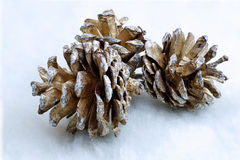 Christmas pinecone Stock Photo