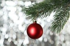 Christmas pinecone on christmas tree on lights background Royalty Free Stock Photo