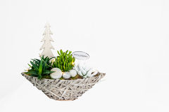 Christmas plant arrangement Royalty Free Stock Photography