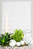 Christmas plant arrangement Royalty Free Stock Photo