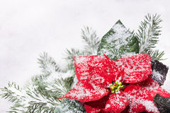 Christmas plant and Christmas tree under snow Stock Images