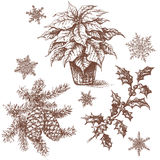 Christmas Plants Set Sketch Royalty Free Stock Photos