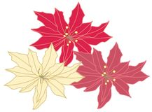 Christmas poinsettia Stock Images