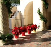 Christmas Poinsettia. Row of four red poinsettia in bright sunshine between two columns decorated with Christmas greenery in Mediterranean garden stock images
