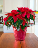 Christmas Poinsettia centerpiece Stock Images