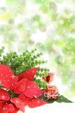 Christmas poinsettia flower Stock Images