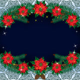 Christmas poinsettia flowers background with pine branches on a background of starry sky and snowflakes. Stock Image